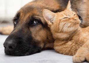 Chiens & Chats, l'app qui permet à la science de mieux connaitre nos animaux
