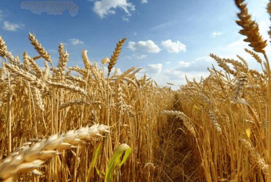 Le digital dans le pré ! Du 28 au 31 juillet, la Foire de Libramont fera la part belle au Smart Farming.