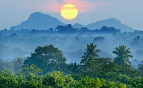 SAP Cloud for Analytics protège les forêts tropicales