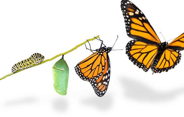 Transformation, oui. Digitale, pas forcément…
