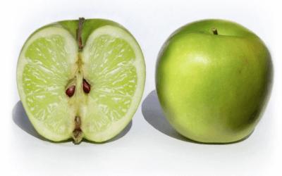 Hybridation, entre agilité et résilience